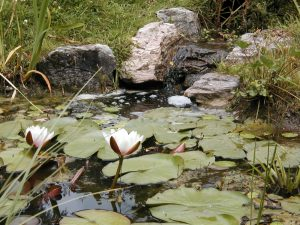 A stream helps to keep the water oxygenated