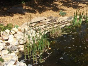 Yorkstone pond edging in its first year