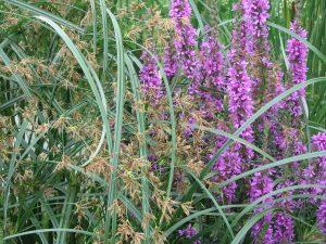 Garden pond flowers